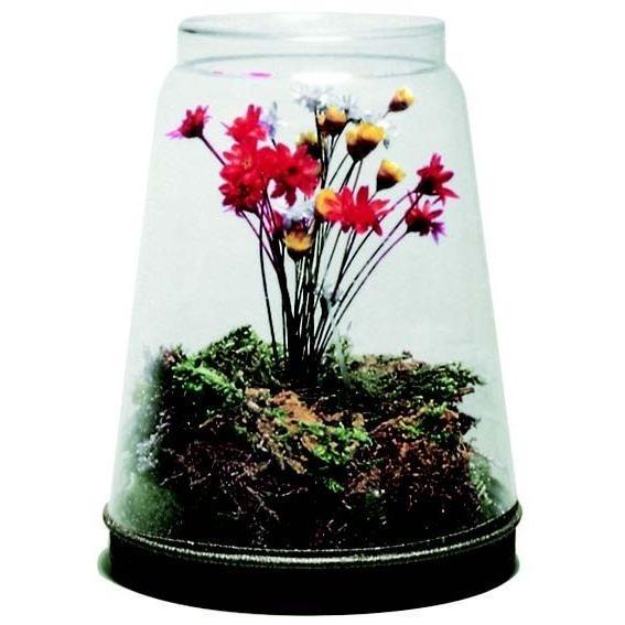 Econocrafts Diy Dried Flower Terrarium